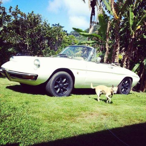 Alfa Romeo Spider White For Sale AR Alfa Romeo - 1967 alfa romeo spider for sale